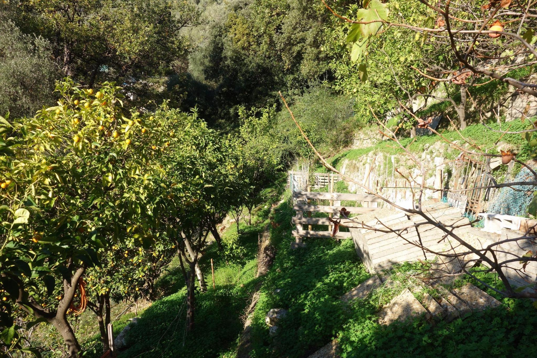Vente menton terrain agricole non constructible de for Prix des terrains non constructibles